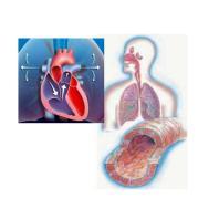 Pulmonale Hypertonie Ambulanz
